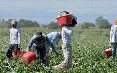 Il diritto del lavoro e la normativa sull'immigrazione